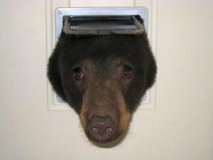 BearCatDoor