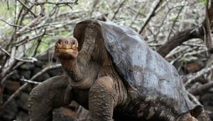 sex-turtle